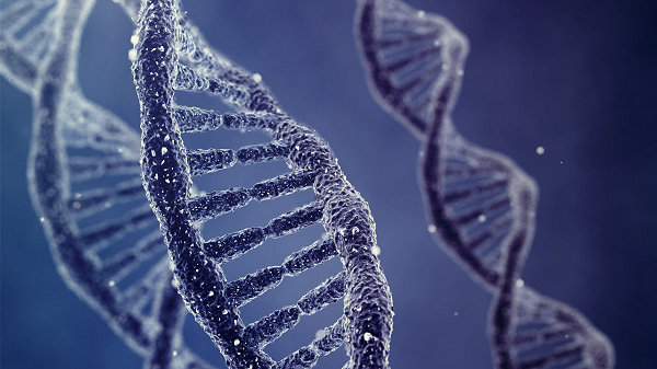 germline genetic modification